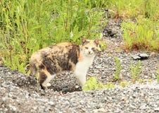 De kat die van de gestreepte kat de camera bekijkt Stock Afbeelding