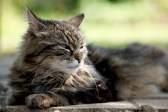 De Kat die van de gestreepte kat een Sunbath neemt Royalty-vrije Stock Foto