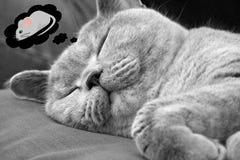 De kat die van de slaap van muizen droomt Stock Foto's