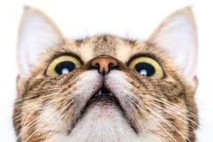 De kat die van de gestreepte kat omhoog eruit ziet stock foto