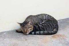 De kat die van de makreelgestreepte kat op vloer bepalen Royalty-vrije Stock Foto