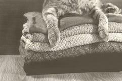 De kat die van Scotishvouwen dichtbij een stapel kleurrijke handdoeken liggen Stock Afbeeldingen