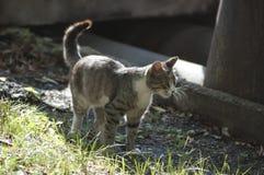 De kat die zich in het gras bevinden onderzoekt een foto Stock Foto