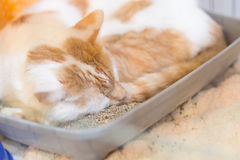 De kat in dierlijke huisdierenschuilplaats redde ongewenste verloren klaar voor goedkeuring Stock Fotografie