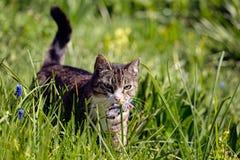 De kat draagt een muis Royalty-vrije Stock Foto's
