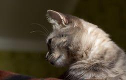 De kat is een cutie Royalty-vrije Stock Afbeeldingen