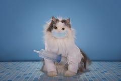 De kat in een kostuum arts vertelt hoe te om de epidemie van infl te behandelen stock fotografie