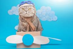 De kat is een leuke vliegenier proef in een document vliegtuig, een Schotse Whiskas in een masker en glazen van een piloot met ru royalty-vrije stock afbeeldingen