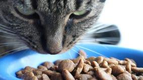 De kat eet close-up stock video