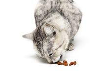 De kat eet droog voedselclose-up op een witte achtergrond stock fotografie