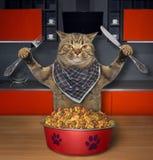 De kat eet droog voer in keuken 2 royalty-vrije stock afbeeldingen