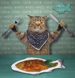 De kat eet een schotel van vissen royalty-vrije stock afbeeldingen