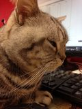 De kat en blinkt uit Stock Foto's