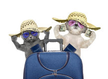 De kat en de hond gaan op een reis met koffer reizen royalty-vrije stock foto