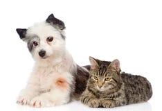 De kat en de hond liggen dichtbij Geïsoleerdj op witte achtergrond Stock Foto