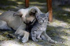 De kat en de hond zijn vriend Royalty-vrije Stock Afbeeldingen