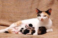 De kat en de kinderen van de moeder Stock Foto's