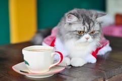 De kat en de koffie Stock Fotografie