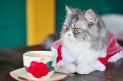 De kat en de koffie Royalty-vrije Stock Afbeeldingen