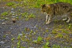 De kat en de muis letten op elkaar stock afbeeldingen