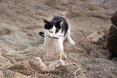 De kat is gevangen vis op het visnet Stock Fotografie