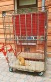 De kat-gevangene stock afbeeldingen
