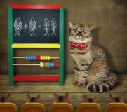 De kat in glazen onderwijst wiskunde stock foto's