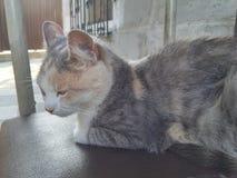 De kat glijdt uit Royalty-vrije Stock Foto