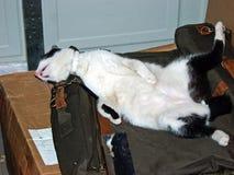 De kat had een lange dag Royalty-vrije Stock Afbeeldingen