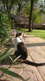 de kat hangt uit in de zon stock fotografie