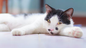 De kat heeft mollen Stock Fotografie
