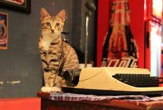 De kat in het hotel royalty-vrije stock fotografie