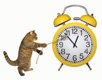 De kat hield de gele klok tegen royalty-vrije stock foto's