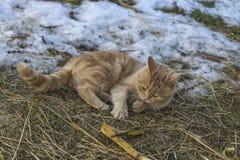 De kat jaagt de muis Royalty-vrije Stock Foto's
