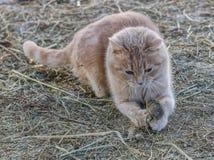 De kat jaagt de muis Stock Foto's