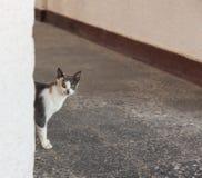 De kat kijkt rond de hoek Royalty-vrije Stock Foto