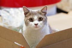 De kat kijkt uit verrast van een verpakkende raad stock foto's