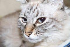 De kat kijkt verdacht stock foto's