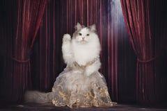 De kat in de kleding zingt op het stadium royalty-vrije stock foto
