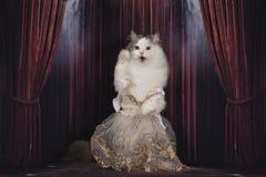 De kat in de kleding zingt op het stadium stock fotografie