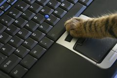 De kat klikt laptop muis royalty-vrije stock fotografie