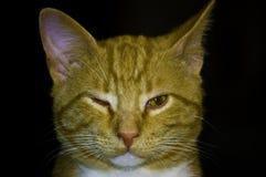 De kat knipoogt Stock Afbeeldingen