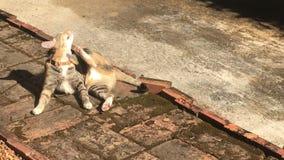 De kat koelde uit in het licht van de de zomerzon stock videobeelden
