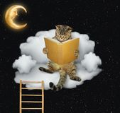 De kat leest het boek op de wolk royalty-vrije stock fotografie