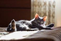 De kat legt op een bed Royalty-vrije Stock Foto's