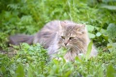 De kat legt op een gras royalty-vrije stock afbeelding