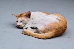 De kat legt op een grijs tapijt royalty-vrije stock afbeeldingen