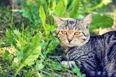 De kat legt op het gras stock afbeeldingen