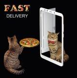 De kat levert de pizza stock foto