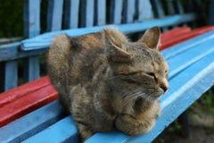 De kat ligt Stock Afbeeldingen